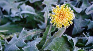 Tomasz Wasilewski mówi o zimnych ogrodnikach