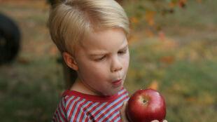 Lubisz jabłka? Poznaj ich niezwykły wpływ na twoje zdrowie