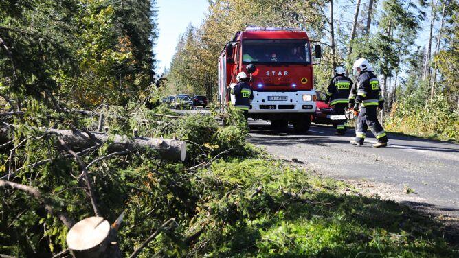 Silny wiatr na południu Polski. <br />Drzewo przewróciło się na mężczyznę