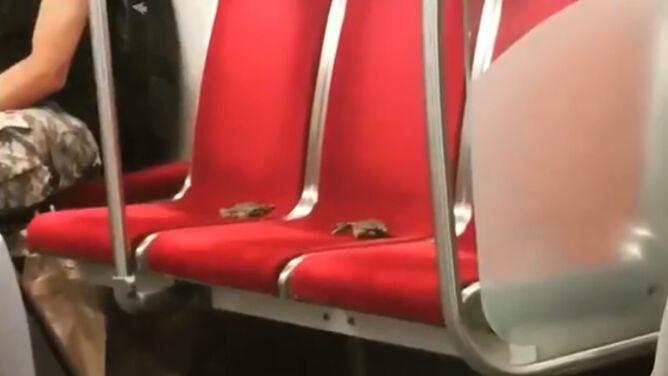 Kraby w metrze. Przejażdżka, którą przypłaciły życiem