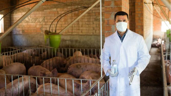 Prewencyjne podawanie antybiotyków zwierzętom. Lekarze z Wielkiej Brytanii przeciwni